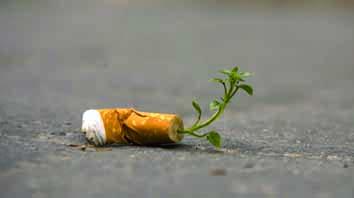 Conoce-los-nuevos-cigarros-ecológicos-un-apoyo-a-la-naturaleza-1